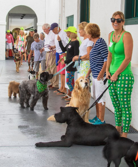 participants lined up with their dogs